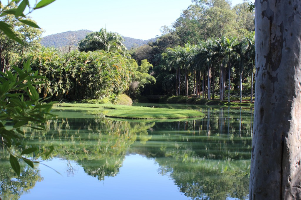 Vista de um dos lagos de Inhotim