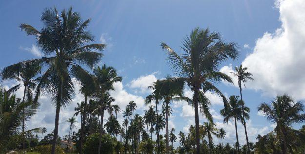 Roteiros de Verão: Brasil